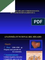 Anatomia Del Higado y Fisiopatologia Insuficiencia Hepatica
