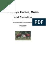 Donkeys, Horses, Mules and Evolution