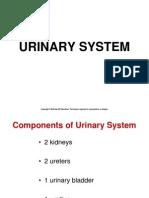 Chapt18 Urinary