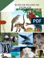 especiesenpeligrodeextincion-100511181659-phpapp01.ppt