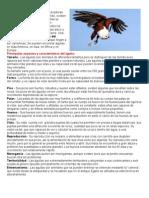 Características Del Águila