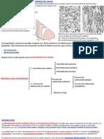 Recristalizacion, Recuperación y Crecimiento Del Grano. Deformacion AltaTemperatura