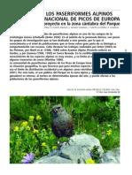 Paseriformes Alpinos