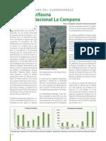 La Diversa Avifauna Del Parque Nacional La Campana