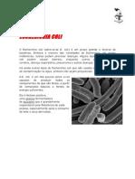 Pesquisa Bacterias