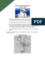 Arqueobiología Unidad II-2015 Aves 2