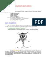 Anatomia