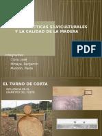 Las Prácticas Silviculturales y La Calidad de La Madera