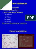 Genero Neisseria