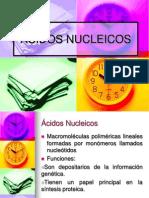 2015ESTRUCTURA DE ÁCIDOS NUCLEICOS (1).pdf