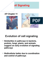 AP Chap 11 Cell Signaling