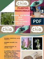 Planta Medicinal CHIA (Luz Esther ) 2015