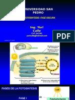 Curso Fisiologia Vegetal 5 Fotosintesis Fase Independiente de La Luz