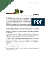 Guarana Estudio Comparativo