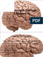 Nervous System Intro Nerves