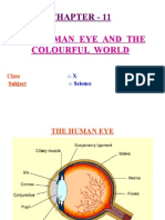 light-human eye and the colourful world ppt