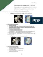 """Uszkodzenie odcinka szyjnego kregosłupa typu """"smagniecie biczem"""" – WHIPLASH"""