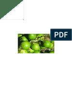 Manfaat Pinang