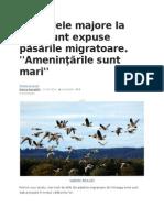Pericolele Majore La Care Sunt Expuse Păsările Migratoare