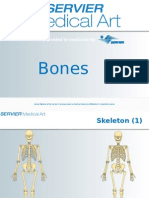Bones.ppt