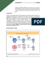 4 Sangue - Cellule e Proteine Plasmatiche