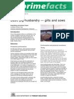 Basic Pig Husbandry-Gilts and Sows - Primefact 70-Final