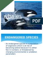 Whales presentation