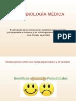 Interacciones animales-microorganismos