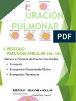 Exposición de Embriología - Morfofisiología 2 Maduración Pulmonar