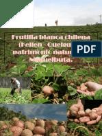 Frutilla Blanca Chilena