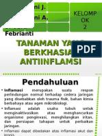 Antiinflamasi Fitoterapi