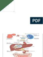 Tutorial Hiperbilirubin Ppt