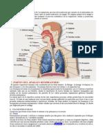 respiratorio.odt
