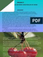 documents.tips_prezentare-sirop-de-visine.pptx