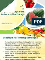 kajian-semangka-dan-beberapa-manfaatnya.pdf