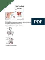 anatomi faring dan laring