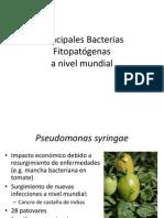 Principales Bacterias Fitopatogenas