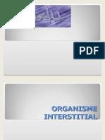 Organisme Interstitial-kel-2