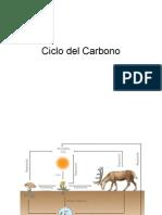 Ciclo Del Carbono, Nitrogeno, Fosforo