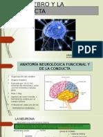 1. El Cerebro y La Conducta