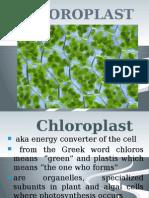 chapter 5 chloroplast