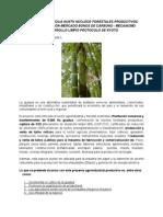 Guadua Angustifolia Kunth Núcleos Forestales Productivos e Industrialización