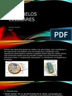 Bio Anatomia