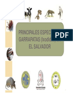 Catalogo de Garrapatas