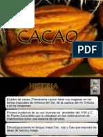 Cacao Oscar
