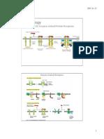 223.22 Enzyme Linked Receptors