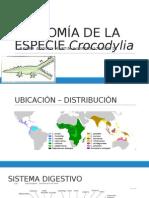 Anatomía de La Especie Crocodylia