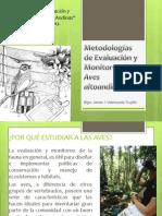 Metodologías de Evaluación y Monitoreo de Aves Altoandinas - Ayacucho 2013