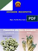 Division Micophyta Hongos