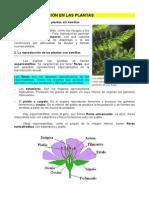 4. La Reproducción en Las Plantas